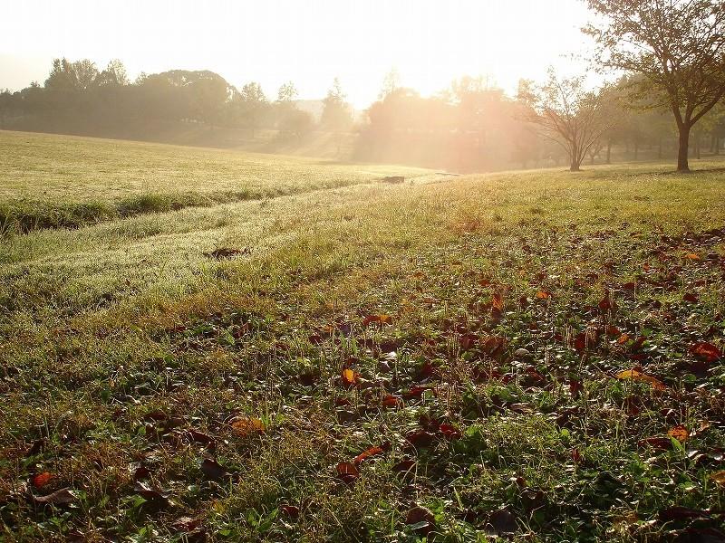 Glittering in morning,kasuga park  7:19