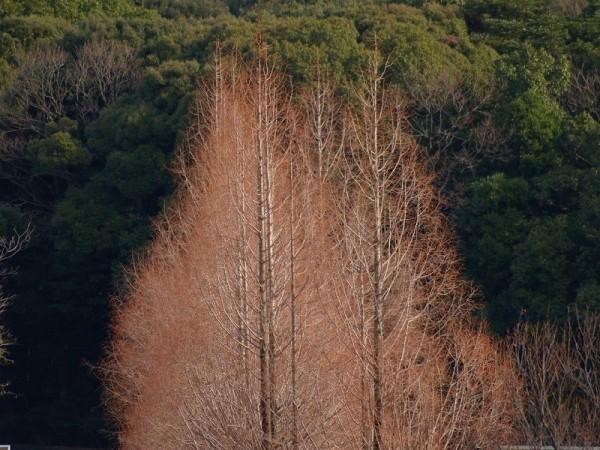 Grove of winter