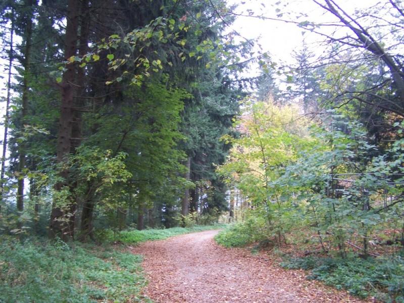 At Königstuhl