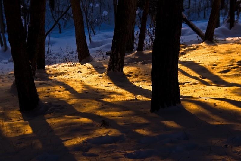 snow, tree, shadow