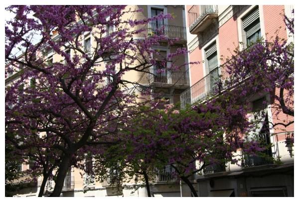 Primavera gironina II
