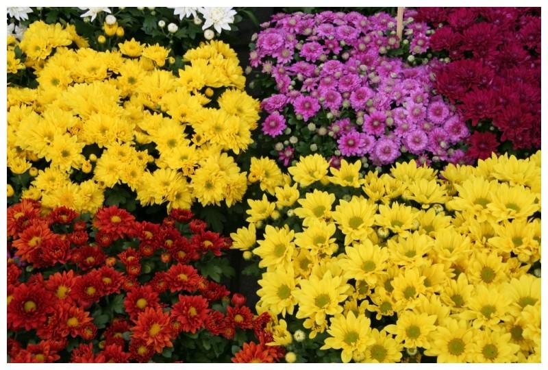 Un munt de flors