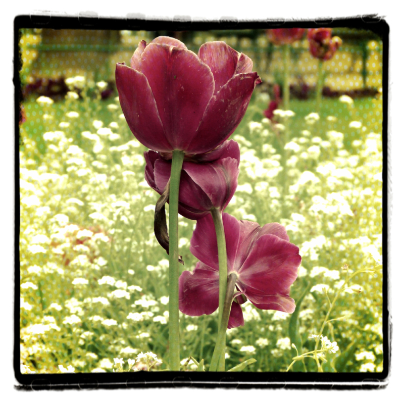 Paris en flor