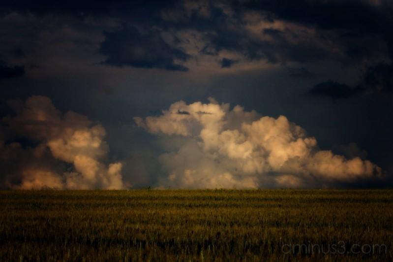 Nuages d'orage au dessus d'un champ de blé
