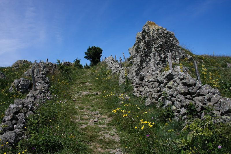 Chemin d'Aubrac #2