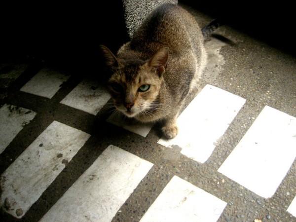 The UST cat