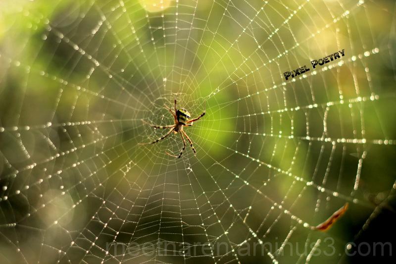 Good morning spider man!
