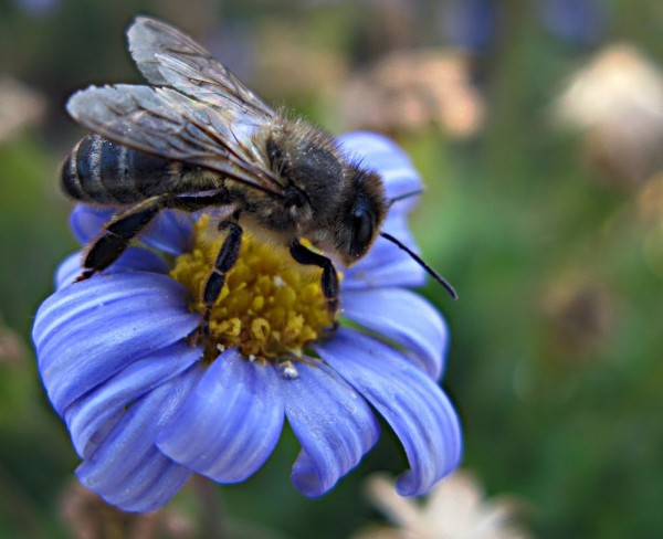 A bee on the flower