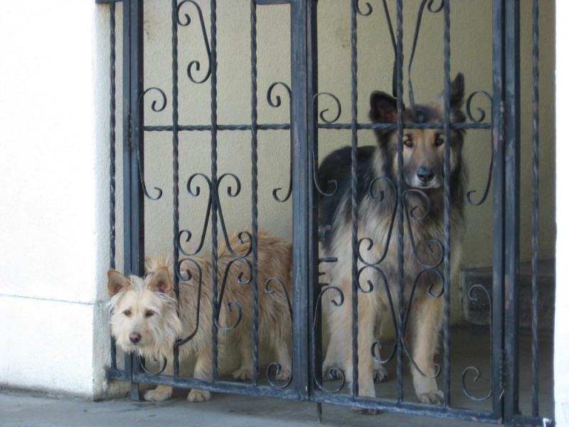 Curious Dogs
