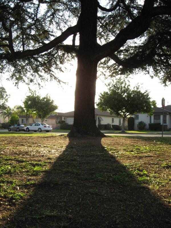 A silhouette tree