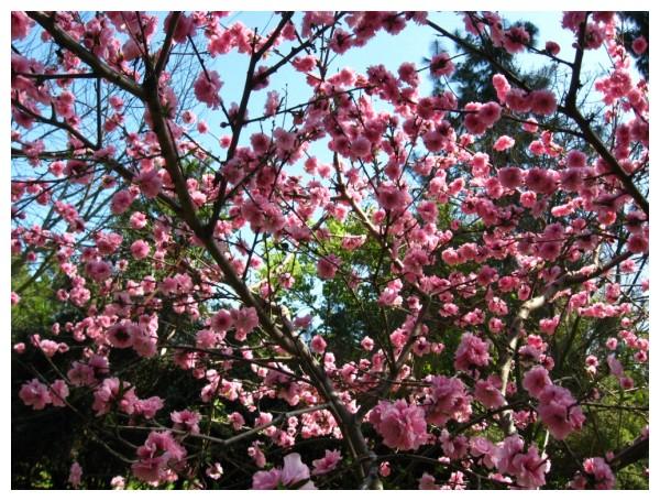 Massive Bloom