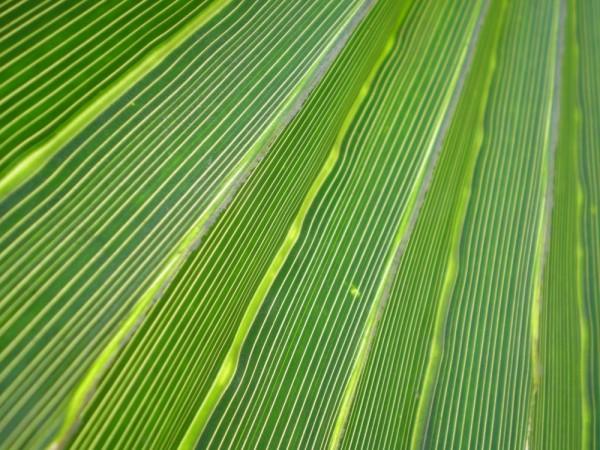 Leaf, Macros, Nature