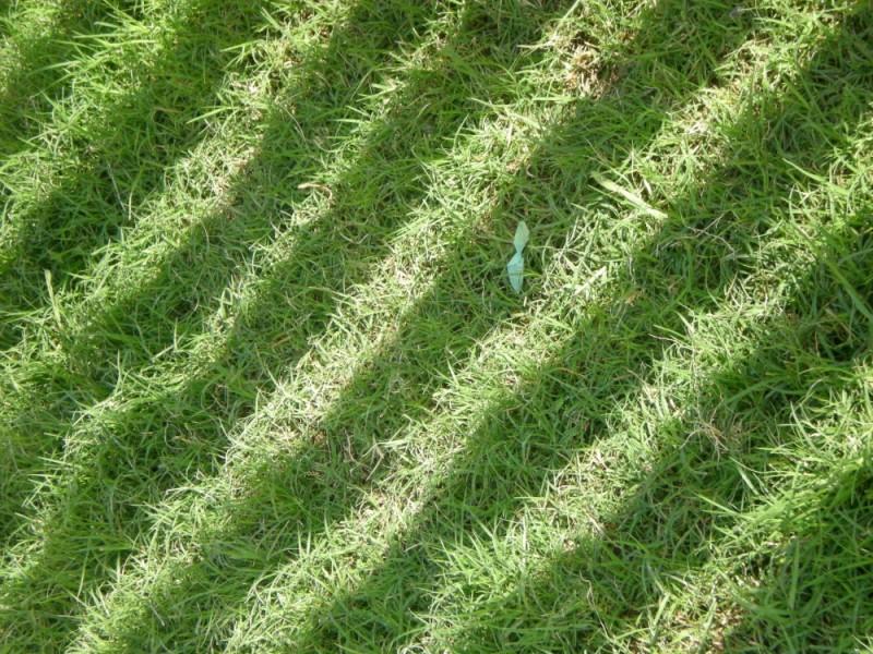 Grass, shadows