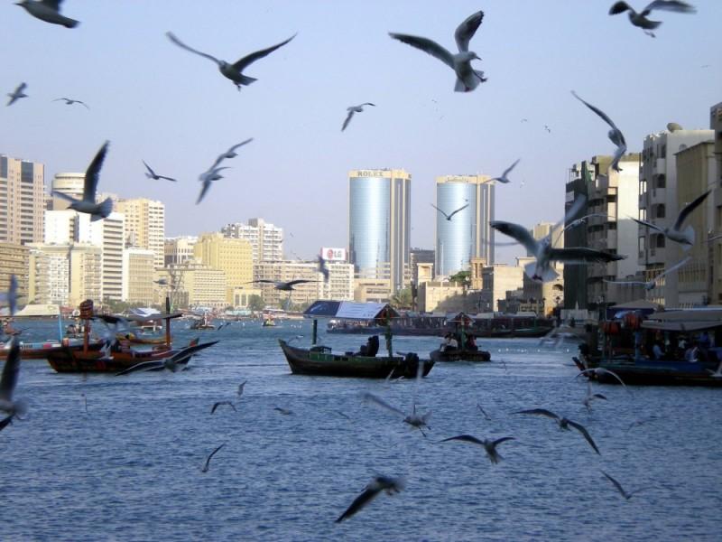 Dubai, Dubai Creek, Abra, Birds, Boats, UAE