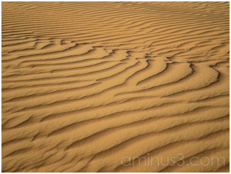 Desert, Abu Dhabi, UAE, Sand, Sand Dunes