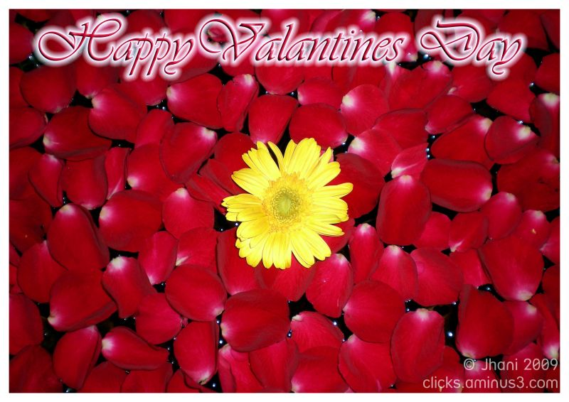 Roses, Red Roses, Valantines Day
