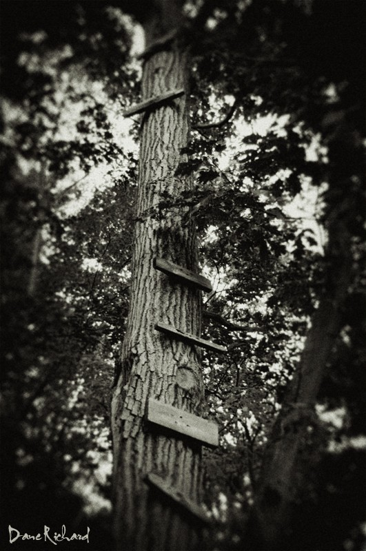 Ladder in the woods