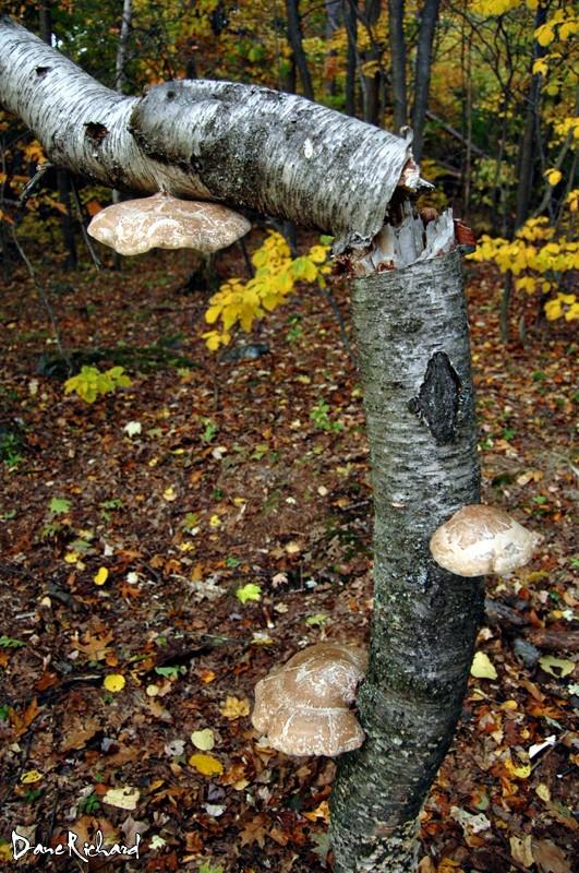 Mushrooms at The Oaks