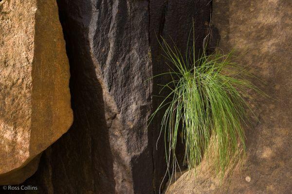 "rock tasmania ""cataract gorge"" launceston"