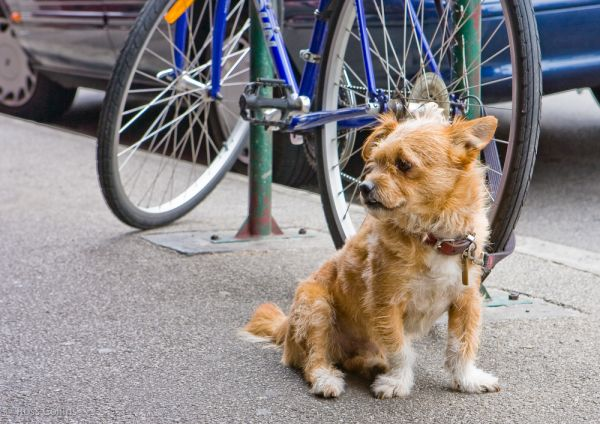 australia blog dogs melbourne diary