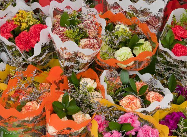 "Newtown Wellington flowers ""Riddiford Street"""