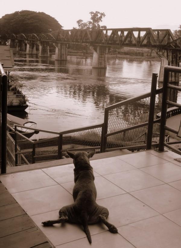 Dog & Bridge of River Kwai