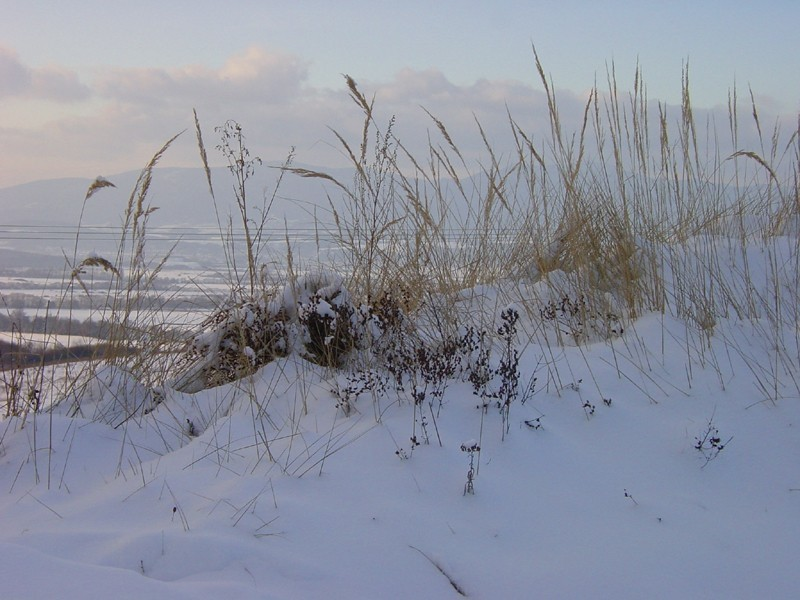 Grass with snow