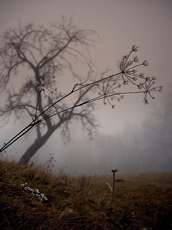 Fog II - Cigel, Slovakia