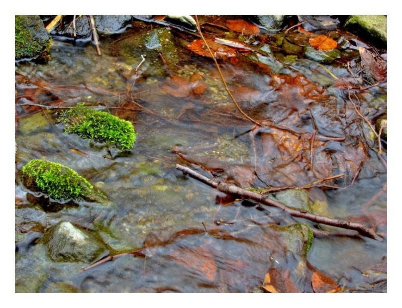 Mountain stream - Cigel, Slovakia