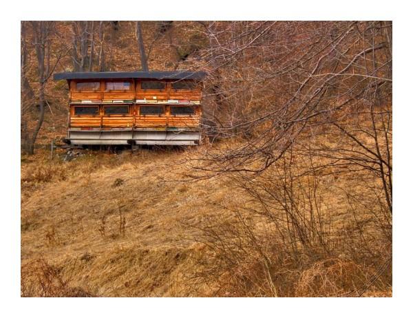 Beehives - Cigel, Slovakia