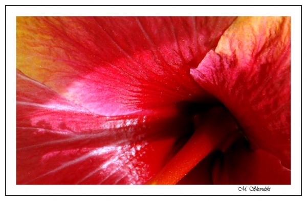 Crimson vortex