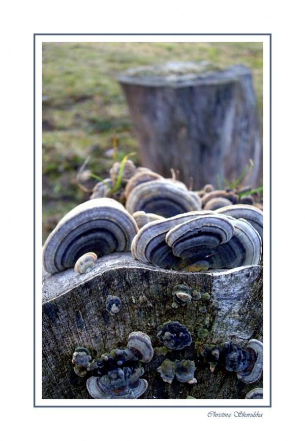 Blue fungus
