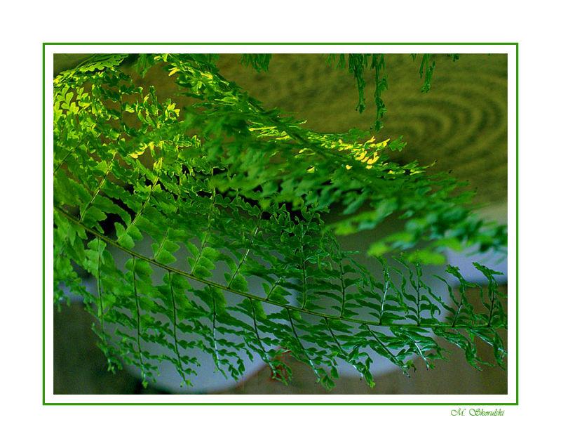 Revelation through a fern