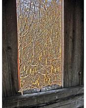 Through a painless window