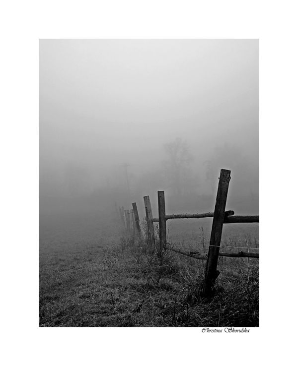 Foggy day 11:  Farm fence