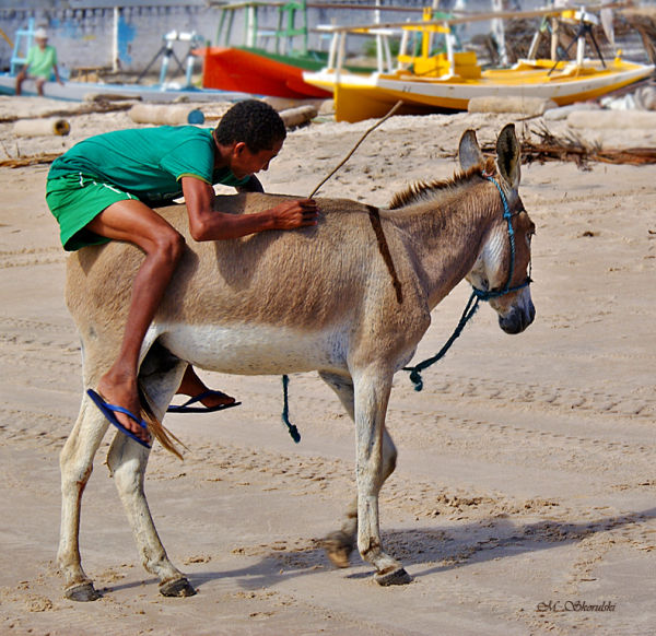 Horsing around on a donkey