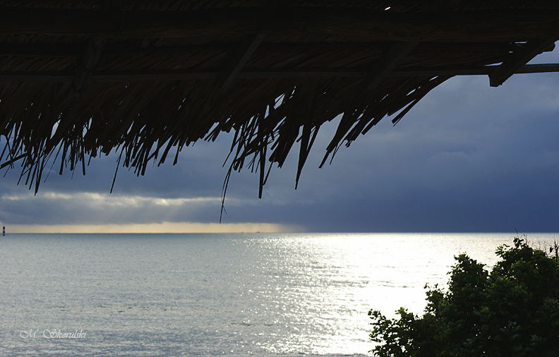 Silver sheen - Maracajau, Brazil