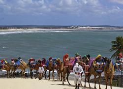 Camel Caravan in Brazil