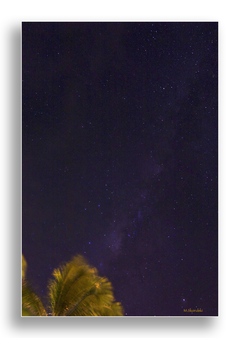Milky Way over the Palm Tree