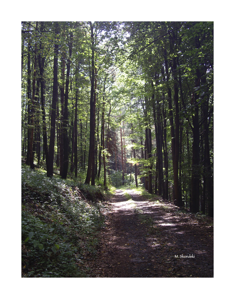 Hiking Trail in Summer