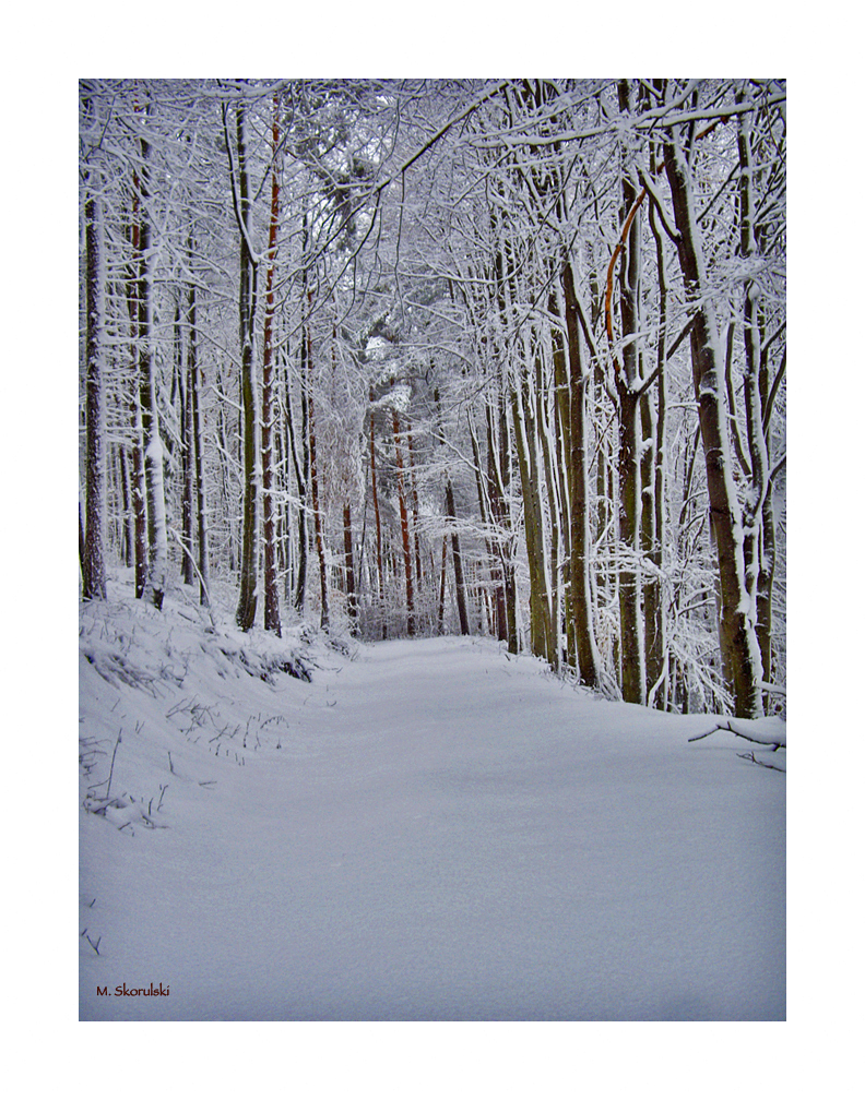 Hiking Trail in Winter
