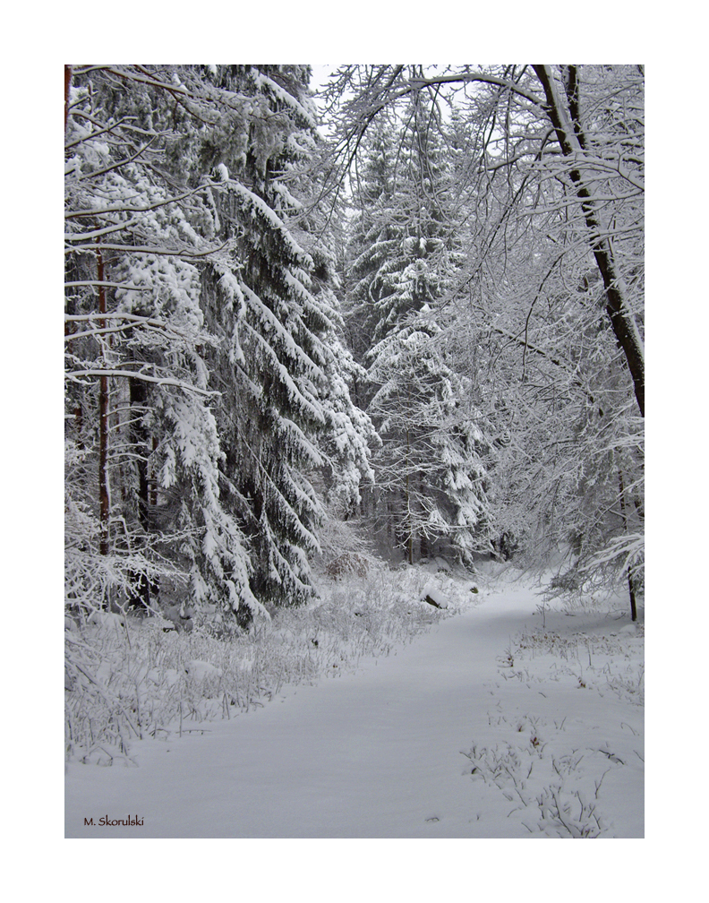 Hiking Trail in Winter 2