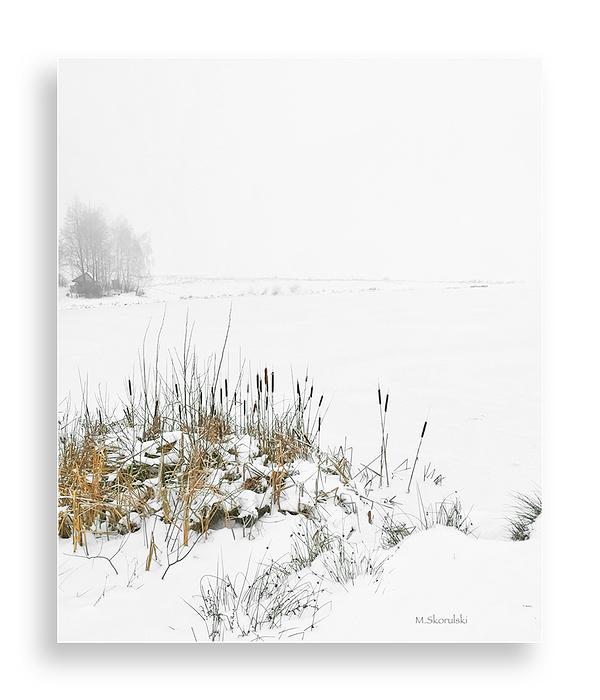 Misty Frozen Pond / étang gelé brumeux