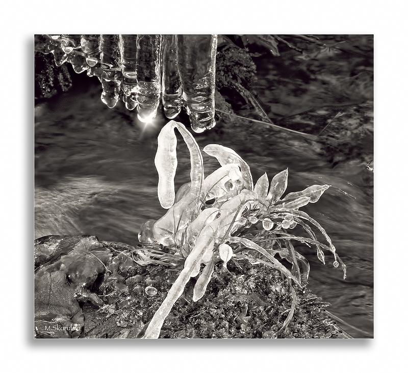 Resting Swan 2 / Cygne au repos 2