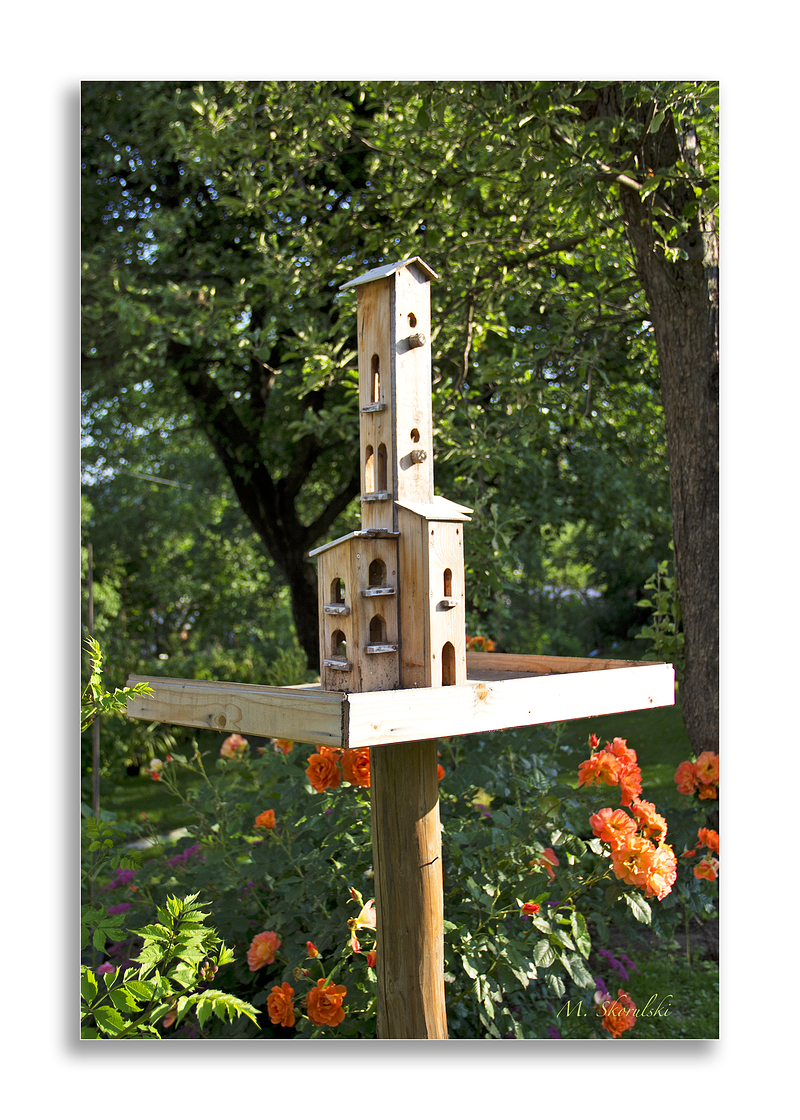 Bird House in summer