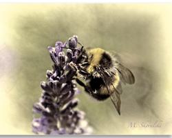 Loose on Lavender 5