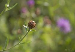 Floral Orb