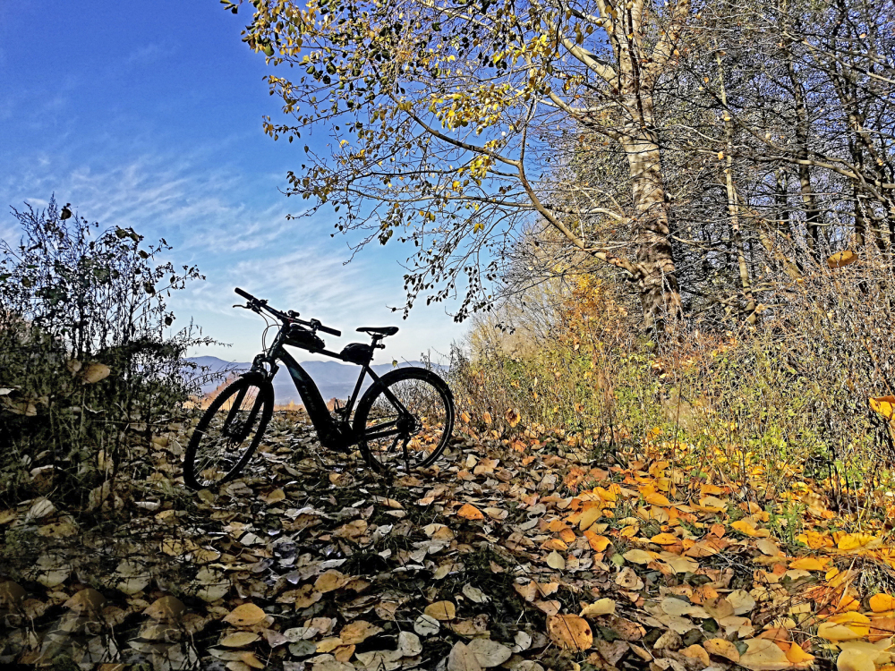 Electric bike and leaves