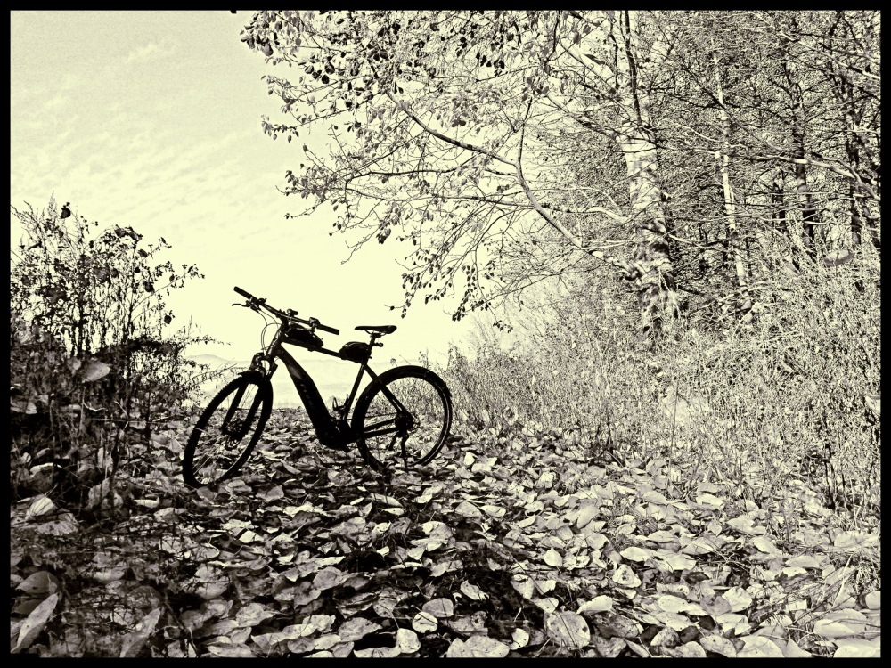 Electric bike and leaves (Version 2)