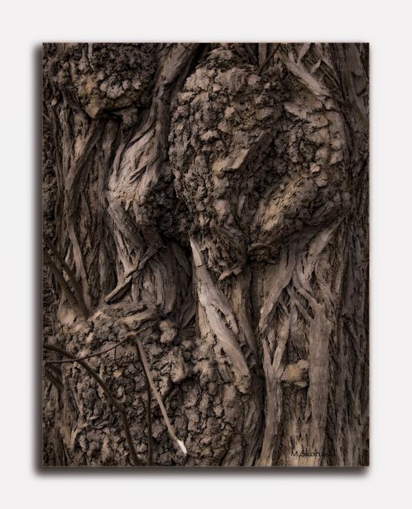 Tree bark faces / Visages d'écorce d'arbre